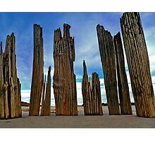 Fort Tilden Driftwood5 Photographic Print