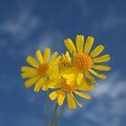 Flower Sun by Kenneth Purdom