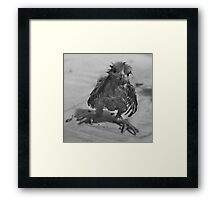 Silly Wet Chicken Framed Print