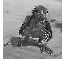 Silly Wet Chicken Photographic Print