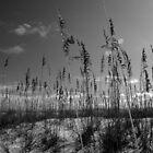 Oat Sky Line by Kenneth Purdom