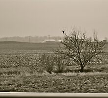 Scenes from a Midwest Roadtrip V by Ginadg73