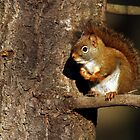 Red Squirrel by Bill McMullen