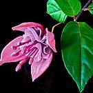 Fuchsia XXII by Tom Newman