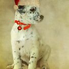 ~ Trixie's Christmas Wish ~ by Lynda Heins