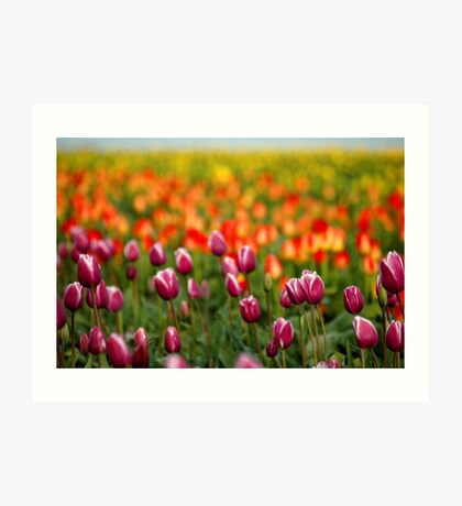 Layers Of Tulips Art Print