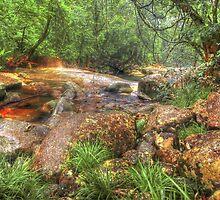 Golden Hole - Babinda QLD by Jennifer Craker