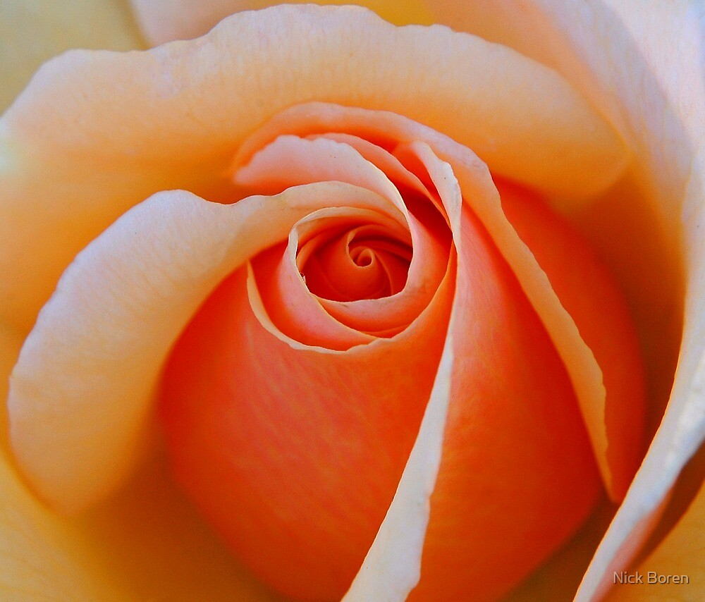 A Rose For My Friends by Nick Boren