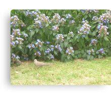 Dove walking into bushes Canvas Print