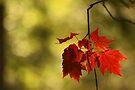 Autumn treasures by Aimelle