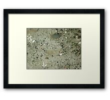 Tiny crabs coming out for a meal Framed Print