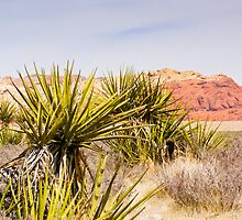 Looking Over the Cacti by Henry Plumley