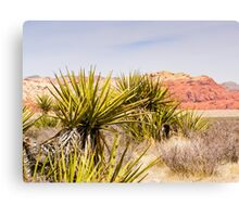 Looking Over the Cacti Canvas Print