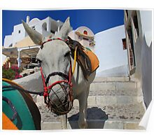 Donkey Train White Poster