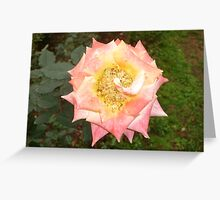 A gentle loving caress Greeting Card