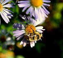 Busy Bee by Sam John