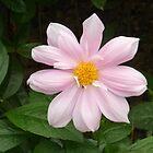 a stunning puprple flower by Joseph Green