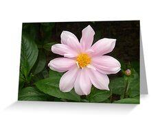 a stunning puprple flower Greeting Card