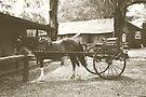 Australian Pioneer Village - Horse & Buggy by yolanda