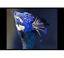 King Pea Blue Photographic Print
