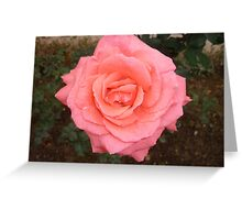 A rose of love Greeting Card