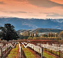 Farm and Vine by BongShei