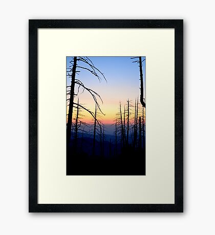 Snaggle Tooth Forest Framed Print