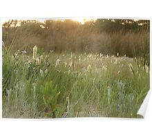 Grass Heads with Sunset Highlights Poster