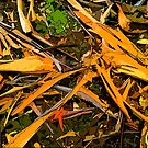 Abstract. Fallen bark, leaves, on forest floor. by ronsphotos