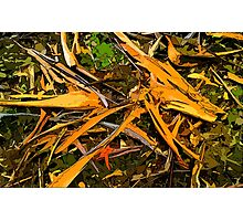 Abstract. Fallen bark, leaves, on forest floor. Photographic Print