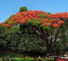 Merry Christmas from Australia by Elisabeth Dubois