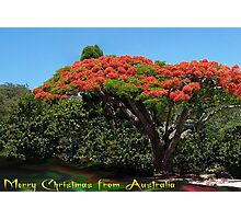 Merry Christmas from Australia Photographic Print