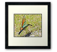 Rainbow Bee-eater 445 Framed Print