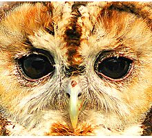 Tawny Owl - Up close and personal Photographic Print