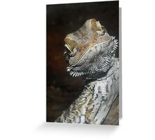 Young Australian Skink Greeting Card