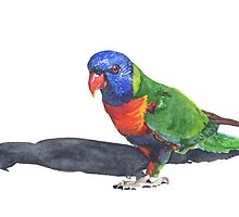 Rainbow Lorikeet by Denise Faulkner