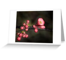 Quince Blossom Greeting Card