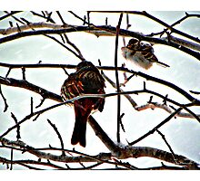 Birds In Winter Photographic Print