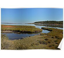 Sea Heather on the banks of the Etang France Poster