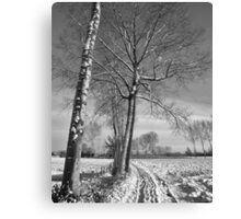 Farm track and Poplars in Winter Canvas Print