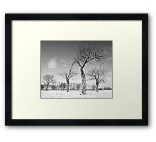 Twisted Cherry Trees in Winter Framed Print