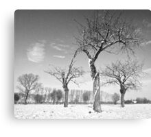 Twisted Cherry Trees in Winter Canvas Print