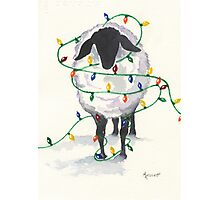 Fleece Navidad (8th in sheep series) Photographic Print