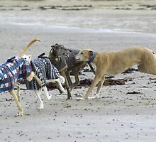 And The Race Is On! by Sally J Hunter