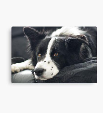 Couch Potato Canvas Print