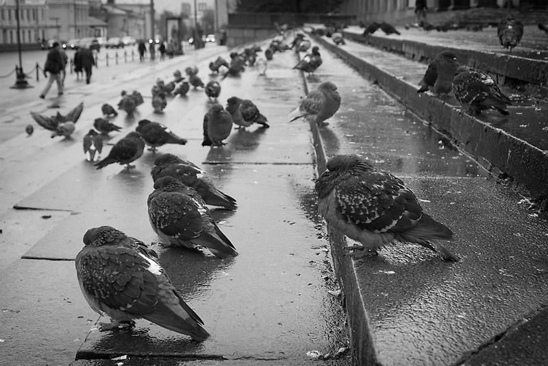 Feathery zombies by Roman Naumoff
