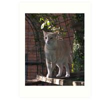 Raymond in the Cattery - Cattery Series #1 Art Print