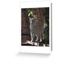 Raymond in the Cattery - Cattery Series #1 Greeting Card