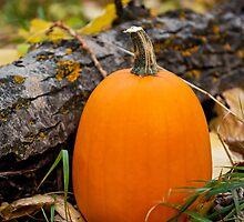 Autumn Pumpkin by mylitleye