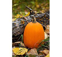 Autumn Pumpkin Photographic Print